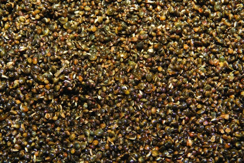 Frenzied Natural Hempseed image 2