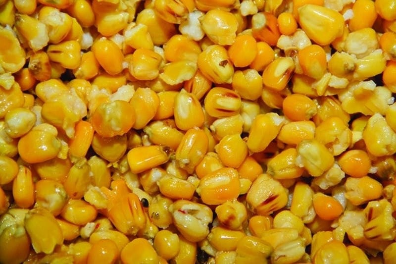Frenzied Natural Maize image 2