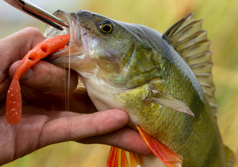 How to Unhook a Fish