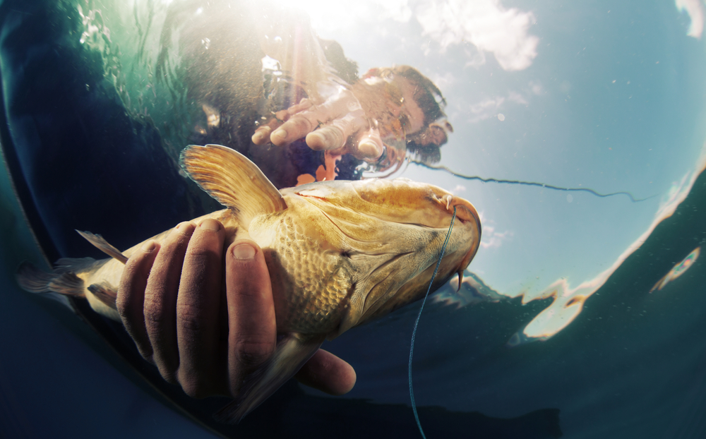 How to practise fishing at home